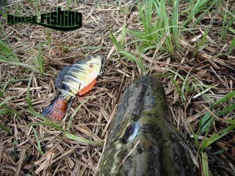 Télécharger le jeu la pêche russe sur landroïde non selon Internet