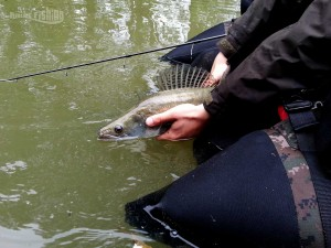 Relaché-sandre-seille-moselle-raisefishing