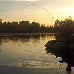 silure-raisefishing