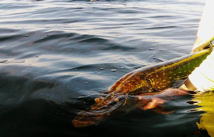 Présenter son poisson