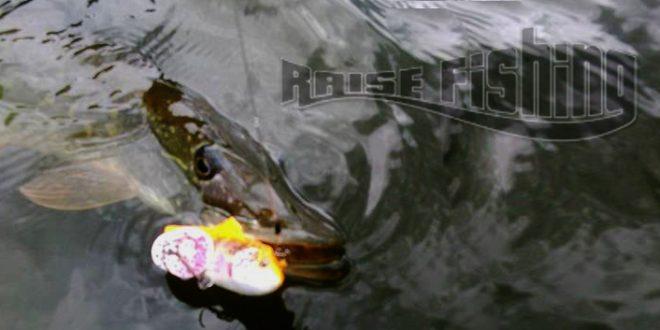 La 3D Trout rattle shad de Savage Gear, un leurre à la porté de tous