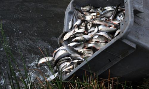 salon de la pêche de strasbourg 2019