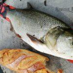 pêche aspe en moselle