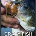 catalogue-crazy-fish-2017