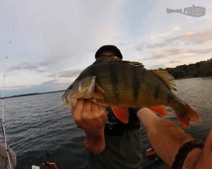 perche-lac-fôret-d'orient-raise-fishing