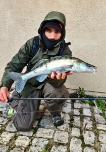 drop-shot-sandre-raisefishing